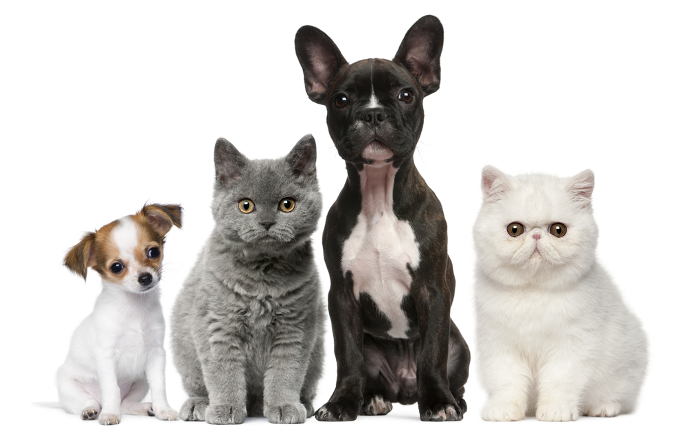 Pet Supplements at Tierrasanta Veterinary Hospital