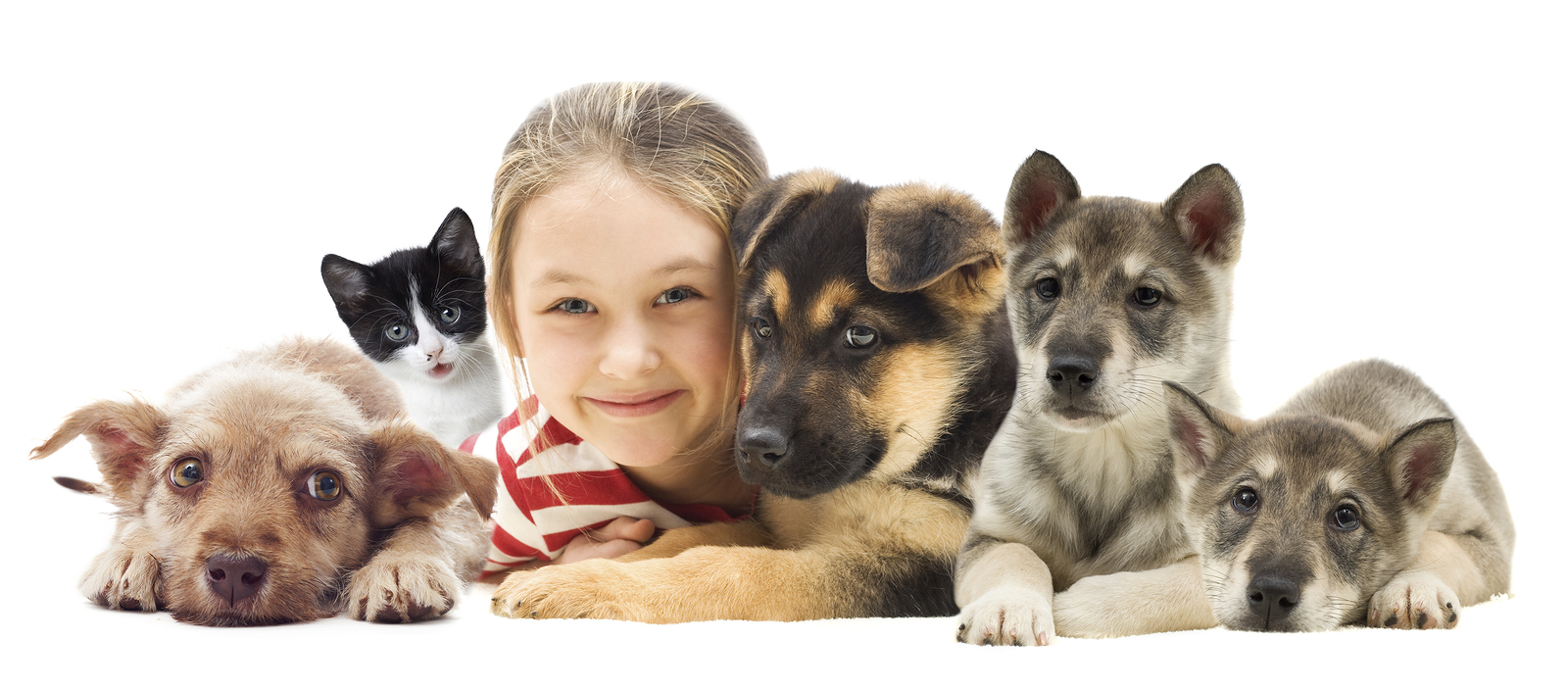 child with puppies and kittens