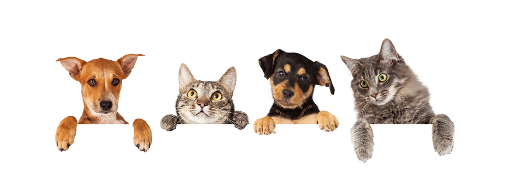 Vaccines To Keep Pet Healthy